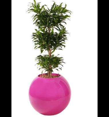 Pflanzenauswahl