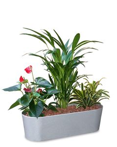 Pflanzensortiment